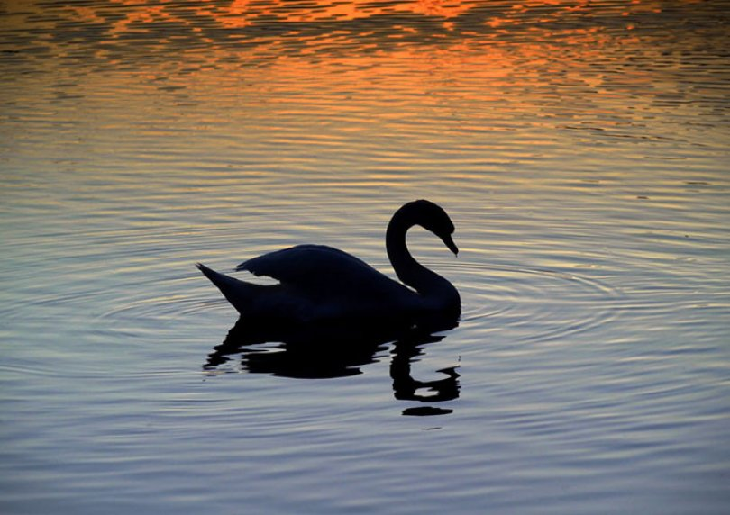 Black Swan theory and organisational resilience
